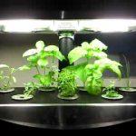 Aerogarden Hydroponic system -herb Garden 22 days