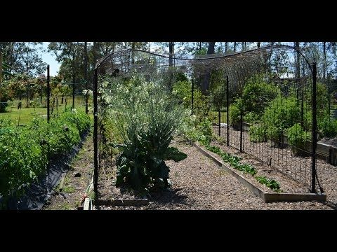 Low Cost Tunnel Trellis to Grow Climbing Vegetables & Fruits Made From Reo Mesh