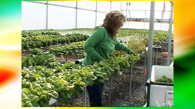 Hydroponics Farm For Profit (Greenhouse – All Year Round Harvest and Vertical Farming)