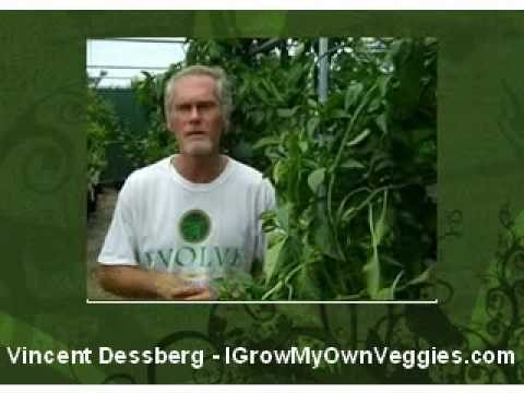 Meet Vincent Dessberg & the 2010 Florida Smalll Farms Conference