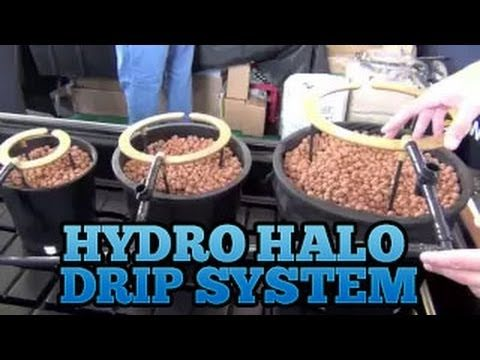 Hydro Halo Halo's – Grow Room Drip System Setup Best Easiest Drip Systems for Indoor Gardens