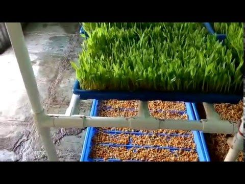 Build Your Own Hydroponic Fodder System for Cattles Part-2 (System Video)