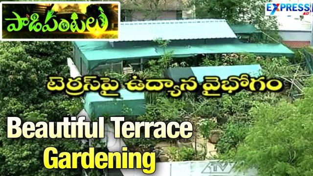 Beautiful & Wonderful Terrace Gardening by Rama Raju in Hyderabad : Paadi Pantalu | ExpressTV