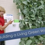 How Do Living Green Walls Work?