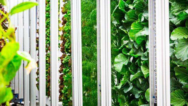 Decoupling Light & Heat in Indoor Farms (Announcement Preview)