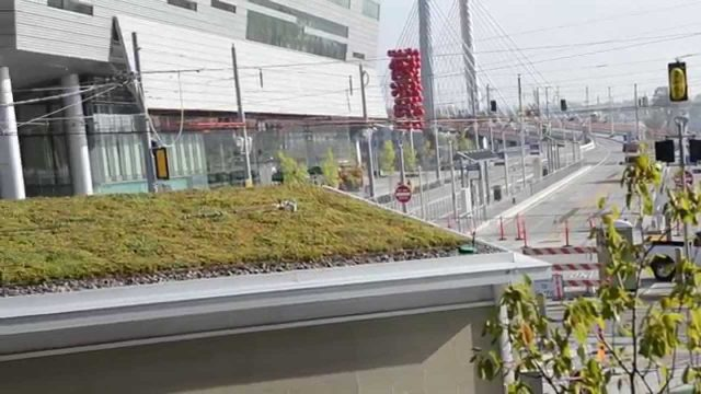 Project Snapshots: Green Roofs