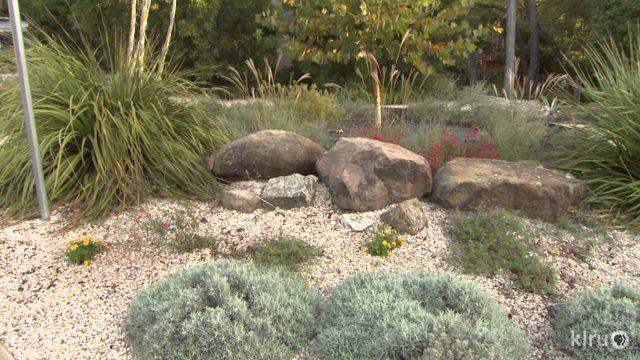Wildlife and Kid Friendly Water Conserving Garden: Robert Leeper design