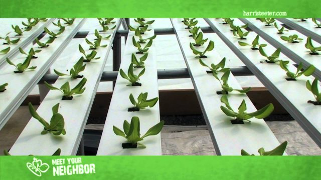 Meet Your Neighbor…True Farms Hydroponic Lettuce