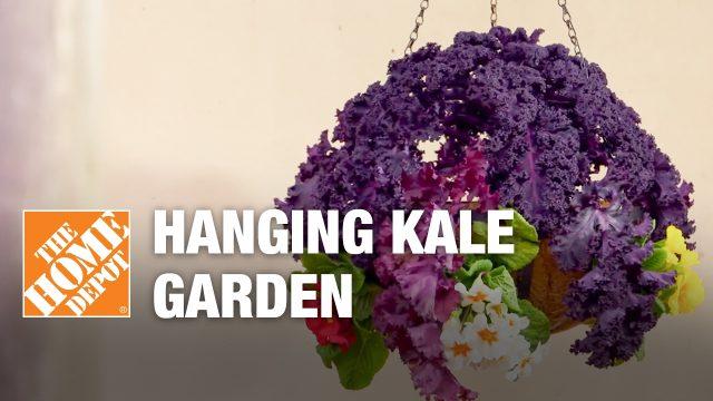 How to Make a Hanging Kale Garden – Small Garden Ideas