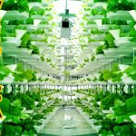 Is this the Farm of the Future?