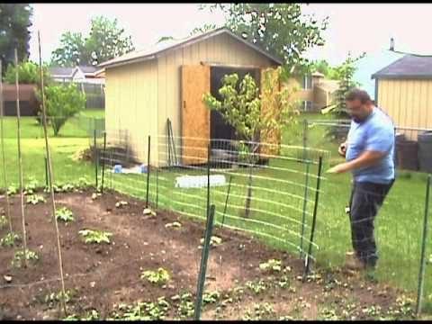 Garden Trellis welded wire fence Installation