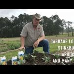 Easy Organic Pest Control for Your  Vegetable Garden