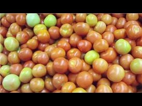 Indoor Gardening Tips : Indoor Tomato Growing Tips