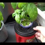 Kratky method hydroponic herbs — Growing without power or soil