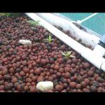 Aquaponics IBC tank