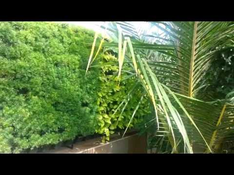 Natural Multicolor Greenwall by Green Wall Nursery, Nashik