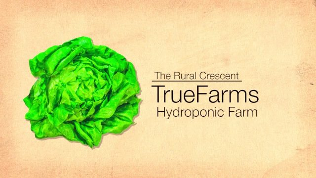 TrueFarms Hydroponic Farm, Farming without Dirt