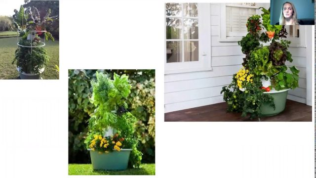 Ariel Selwyn – Why have a Tower Garden | Juice Plus Fredericksburg VA