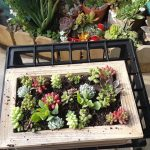 The Succulent Source… Live Wall Art!