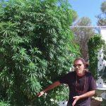 Aeroponic Marijuana – Grow 3 Pounds of Cannabis on just 1 Tower Garden