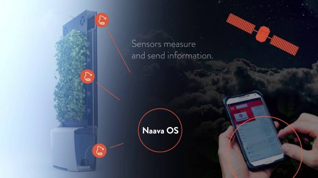 This is how Naava Smart Greenwall works