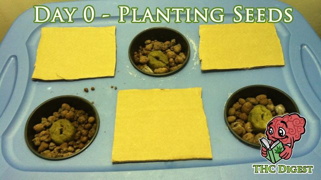 Hydro Weed Grow – Day 0 – Planting Seeds