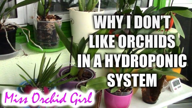 Why growing orchids in semi hydroponics is NOT for me