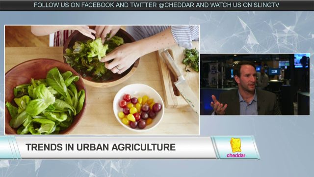 Bowery Farming Leads the Way with Indoor Agriculture to Help Feed a Growing Population