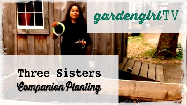 Vegetable Gardening: Three Sisters Companion Planting