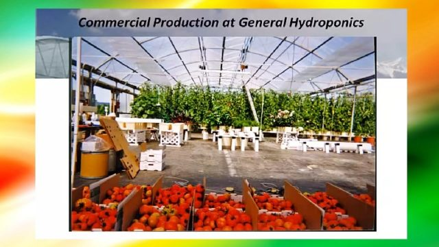 How Does Hydroponics Work For Greenhouses 🌱 ? (Informative Lecture)