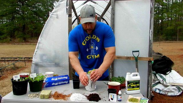 Mason jar hydroponics/Grow leafy greens