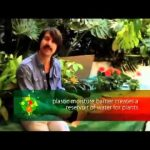 Create a Living Wall at Home with Plastics.mp4