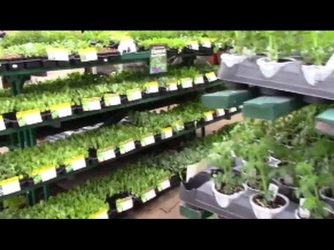 VEGGIE MANIA – Fall Vegetable Gardening in Florida – The Perfect Time
