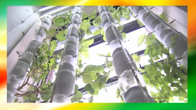 Vertical Hanging Garden (Introducing Hydroponics DIY At Home and Dry Your Harvest Kit)