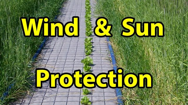 Best Wind & Sun Protection in NO TILL Homesteading Vegetable Gardening for beginners 101