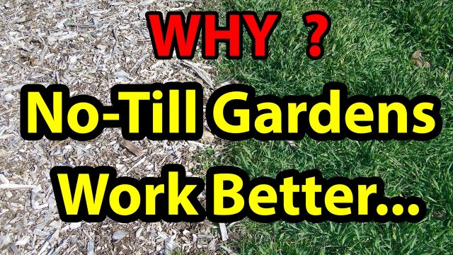 WHY No Till Gardening Works Best with living roots, Organic Vegetable gardening for beginners 101.