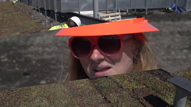 Greenroof Retrofit Lessons Learned  Out with the old and in with the new HD