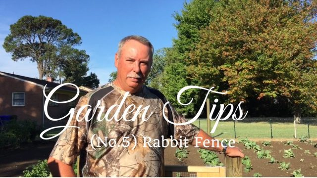 HD Vegetable Garden Tip No.5: How to Install a Rabbit Fence