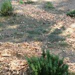 Lassen elementary school garden