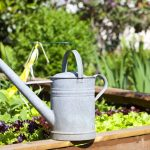 Advantages Of Herb Gardening – Fragrant Smelling Herbs