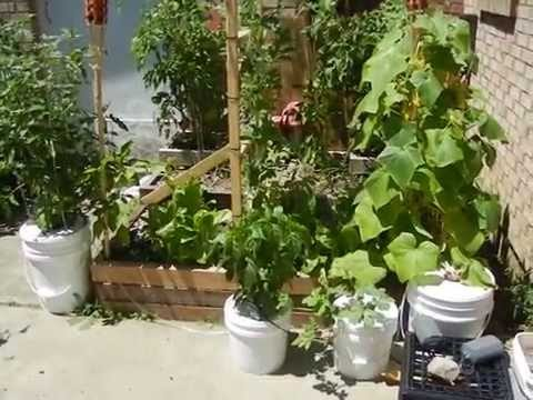 EASY AND SIMPLE OUTDOOR ORGANIC DWC HYDROPONICS BUCKET SYSTEM