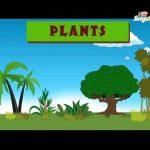 Learn about Plants | Easy Learning for Children | Nursery Rhymes | Preschool | Kids | Kindergarten
