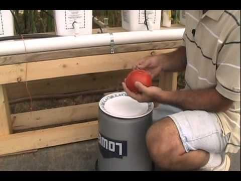 Hydroponic Tomato Taste Test