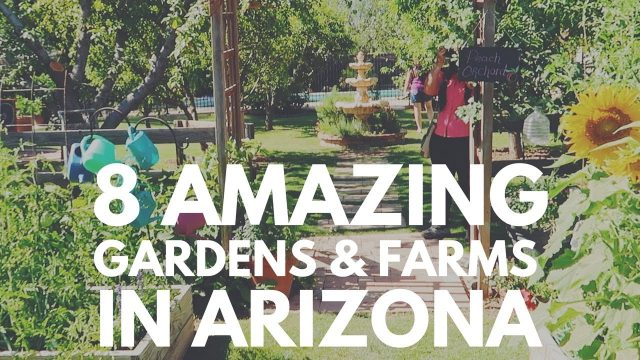 8 AMAZING Gardens & Farms in ARIZONA