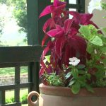 Summer Gardening – Container Gardening Basics