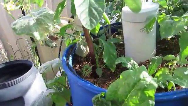 Garden Efficiency with Worm Castings & DIY Garden/Worm Tower