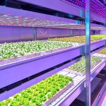Future of Agriculture: Vertical Farms to Sustainable Aquaculture