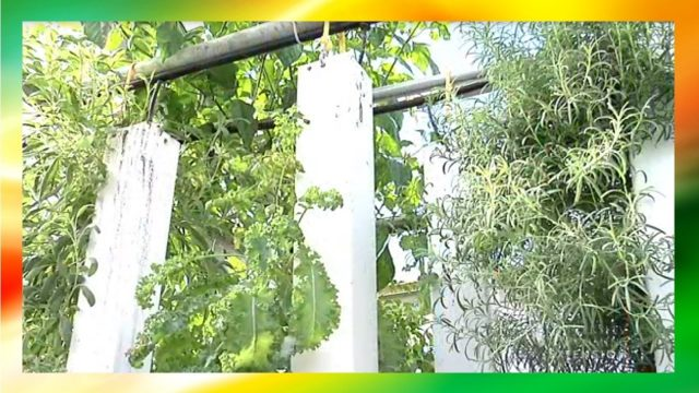 Aquaponics Grow Tower (Tips and Tricks On Growing Vertically with Fish)