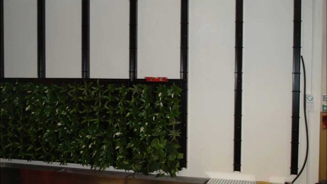 How to install an interior green wall into an office by Enterprise Plants