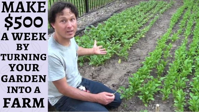 Make $500 a Week By Turning Your Garden into a Farm